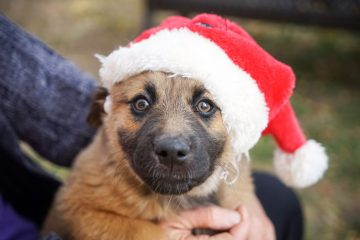 dog-with-christmas-hat